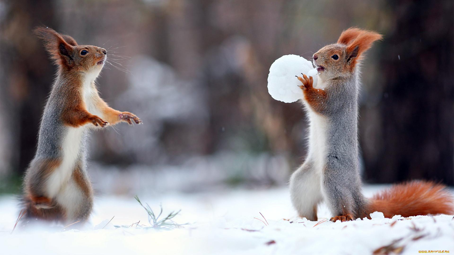 картинки животных в зимнее время года все понимает